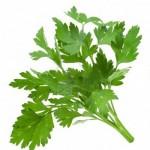 herbs_parsley