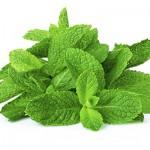 herbs_peppermint